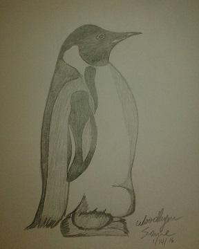Penguin - resized